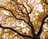 autumn tree nature